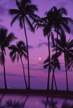 Solid-Faced Canvas Print Wall Art Print entitled Palm trees with moon in a bright pink and purple sky, reflecting on still water. Sunset Wallpaper, Tree Wallpaper, Wallpaper Backgrounds, Spring Wallpaper, Aesthetic Iphone Wallpaper, Aesthetic Wallpapers, Palm Tree Sunset, Florida Palm Trees, Palm Trees Beach