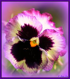 Who Me Pretty Pansy by BigKidsLoveToys - off more than on, via Flickr
