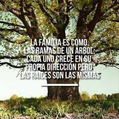 La familia es como las ramas de un árbol: cada uno crece en su propia dirección pero las raíces son las mismas.