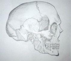 skull by Adisida on DeviantArt My Drawings, Pencil, Skull, Deviantart, Sugar Skull