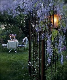 Wisteria by lamplight.