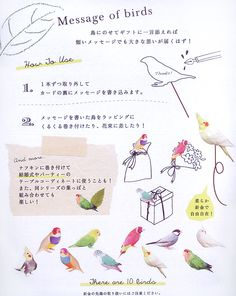 【Greeting Life】Message of birds/オカメ・ラブバ・コキン・文鳥 MM-66 鳥専門店 BIRD MORE