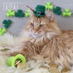 ✨☘️Happy Saint Patrick's Day! ☘️✨