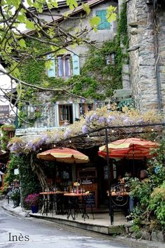 the wisteria is just amazing. such a beautiful patio for a business!