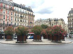 Le rond-point aux lauriers roses de la place Léon Blum #Paris #été #fleur http://www.pariscotejardin.fr/2016/08/le-rond-point-aux-lauriers-roses-de-la-place-leon-blum/