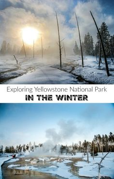 Exploring Yellowstone National Park in the Winter | Yellowstone National Park in winter is way more spectacular in the winter when the hills are blanketed in snow webbed with mineral-rich rivers and the famous springs and geysers are gushing thick pillars of steam into the freezing blue sky. Here are some of the things you can see and do on a winter trip to Yellowstone National Park.