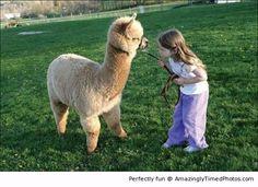 Girl and her pet alpaca | Amazingly Timed Photos