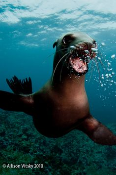 Happy seals are the cutest!