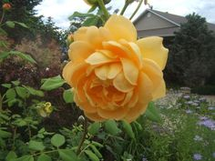 Easy Tips for Pruning Roses