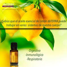 Conoce los sistemas del cuerpo a los que beneficia el aceite esencial de limón doTERRA