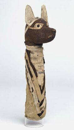 mummified jackal. Showing similarity to nTr determinative