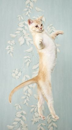 Ballet bad boy