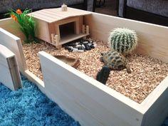 Tortoise Table.