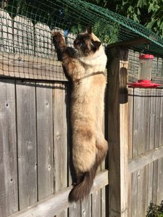 Diy Cat Enclosure, Outdoor Cat Enclosure, Reptile Enclosure, Anti Chat, Cat Fence, Cat Garden, Outdoor Cats, Cat Behavior, Cat Furniture