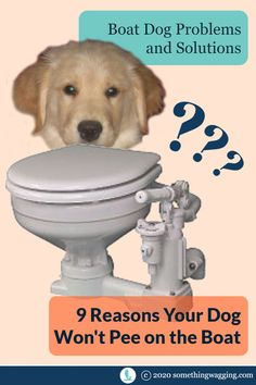 Setting out to live and travel on a boat full time? Make sure your dog know how to use the bathroom on the boat. #cruisingdog #boatdog #cruising #liveaboard Crate Training, Dog Training Tips, Dogs On Boats, Sailboat Living, Dog Pee, Kinds Of Dogs, Pet Travel, New Puppy, Health And Safety