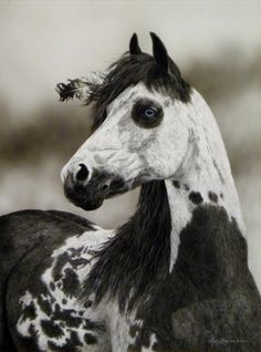 Iron Horse or as the Lakota say Shunke canku http://media-cache5.pinterest.com/upload/260575528409929376_06FmD6Z3_f.jpg cshorseman wonderful world of animals