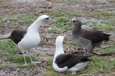 Politics - Pro Vs Con, and Mediator Midway Atoll, Green Ideas, Endangered Species, Politics, Shades, Science, Inspiration, Biblical Inspiration, Sunnies