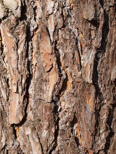Picture of close up of pine tree bark stock photo, images and stock photography. Oak Tree Bark, Wood Bark, Pine Tree, Wood Tree, Picture Tree, Picture On Wood, Small Palms, Celtic Tree, Kiefer