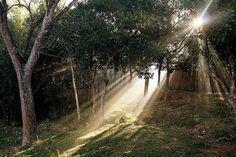 20 Amazing Natural Light Photography
