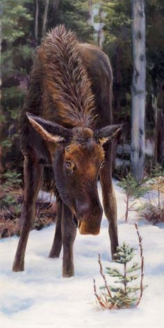 """""""Signs Of Spring"""" by Karen Whitworth.  Young bull moose and budding pussy-willows."""