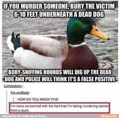 Murderous duck