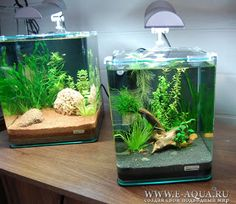 andrew 39 s 2nd tank planted spec 2 tank boraras maculatus wild tigers arrived d page 3. Black Bedroom Furniture Sets. Home Design Ideas