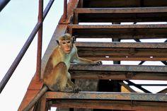 Travel, Monkey, Primates, Travel, Stairs, Stage #travel, #monkey, #primates, #travel, #stairs, #stage