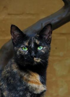 Jade by luvmypets