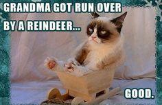 grumpy cat christmas pics   Very Grumpy Cat Christmas Meme Roundup   Surviving College