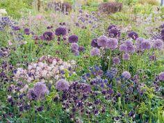 Come coltivare un giardino caotico