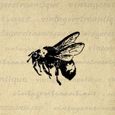 Anique Bee Digital Image Download Collage Sheet Bumblebee Illustration Printable Graphic. High resolution printable graphic download for making prints, iron on transfers, and more. Real vintage clip art. Great for use on etsy items. This graphic is large and high quality, size 8½ x 11 inches. A Transparent background png version is included.