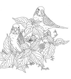 adult nature coloring pages meer dan 1000 afbeeldingen over colorir animais op nature pages adult coloring Coloring Pages Nature, Coloring Pages For Grown Ups, Animal Coloring Pages, Coloring Pages To Print, Coloring Book Pages, Coloring Sheets, Garden Coloring Pages, Flower Coloring Pages, Illustrator