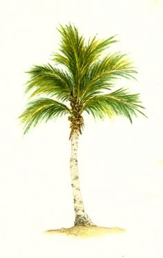 ideas palm tree drawing plan for 2019 Palm Tree Sketch, Palm Tree Drawing, Tree Sketches, Beach Drawing, Pine Tattoo, Tattoo Tree, Palm Tree Sunset, Palm Trees, Tree Drawings Pencil