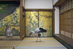 Karen Knorr - Monogatari: Cultivating Happiness (Chishaku-in Temple, Kyoto)