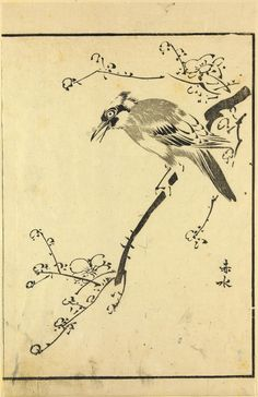 Page from a woodblock-printed illustrated book, bird on branch: Japan, by Sekisui, 18th - 19th century.