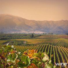 O Valle Central é responsável pela maior parte da produção de vinho chileno. Cenário ideal para degustar um rótulo da região. ;) #vinho #wine #Chile