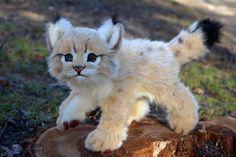 Poseable toy Commission: Bobcats cub by MalinaToys.deviantart.com on @DeviantArt