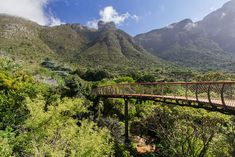 This Canopy Walkway In Cape Town Allows You To Walk High Above The Trees----Informally referred to as 'The Boomslang', which translates to tree snake, this low-impact sculptural raised walkway is truly one of a kind. The walkway starts at the forest floor and then ascends upward, granting views of the forest from every angle possible.