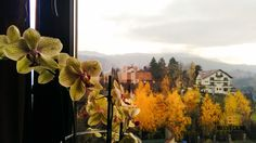 #interior  #autumn  #view #flower #belvedererestaurant #outside #autumnbreeze #gorgeousview #brasov  #nofilter Indoor, Exterior, Pictures, Painting, Interior, Photos, Painting Art, Paintings, Outdoor Rooms