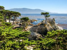 """""""The 17-Mile Drive through the Monterey Peninsula rivals the Pacific Coast Highway in quintessential California fame and beauty,"""" says RoadTrippers.com CEO James Fisher. """"This loop hugs the coastline, running alongside Pebble Beach Golf Links, past the landmark Lone Cypress and through the Del Monte Forest."""""""