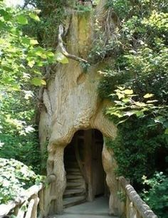Tree trunk house