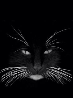 black whiskers