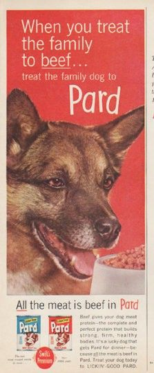 """1961 PARD DOG FOOD vintage magazine advertisement """"treat the family to beef"""" ~ When you treat the family to beef ... treat the family dog to Pard. All the meat is beef in Pard ... Beef gives your dog meat protein -- the complete and perfect protein that builds strong, firm, healthy bodies. It's a lucky dog that gets Pard for dinner -- because all the meat is beef in Pard. Treat your dog today to Lickin'-Good Pard. ~"""