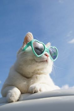 you have to live your life knowing you will never be as cool as this cat