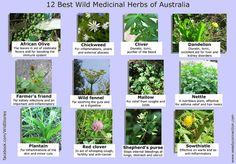 12 Best Medicinal Plants in Australia