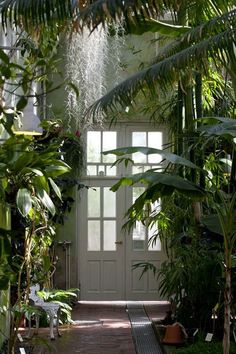 Opening the door and stepping right into the jungle! This hallway is a dream!