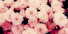 Simple header with roses flowers