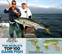 Yellowtail on Pinterest | Boats, Fishing and Nice