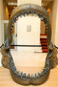 Christie's to hold Auction of Prehistoric Artefacts. Megalodon shark jaws.