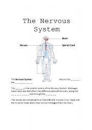Worksheets Nervous System Worksheet english teaching worksheets nervous system pinterest system